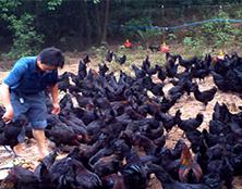 宝积80后合作伙伴 易海洋 乌鸡专业养殖